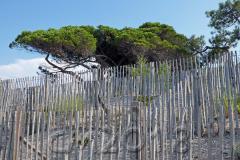 Korsika, am Strand von Calvi, Autor: Charlotte Moser