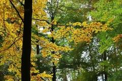 Michelsberger Wald, Bamberg, Autor: Charlotte Moser