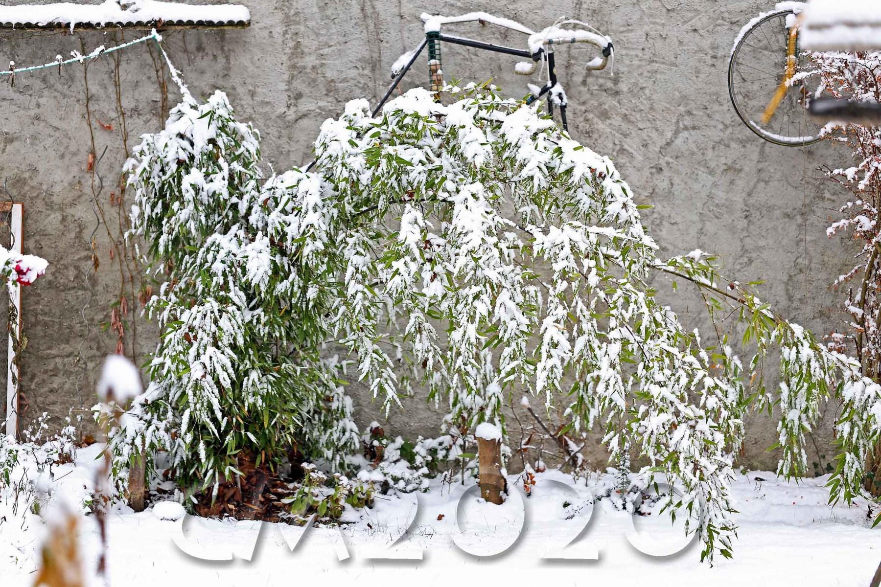 Schnee in Bamberg, Autor: Charlotte Moser