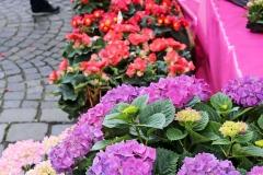 Spaziergang durch München, Viktualienmarkt, Autor: Charlotte Moser
